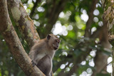 Monkey Perched on a Tree