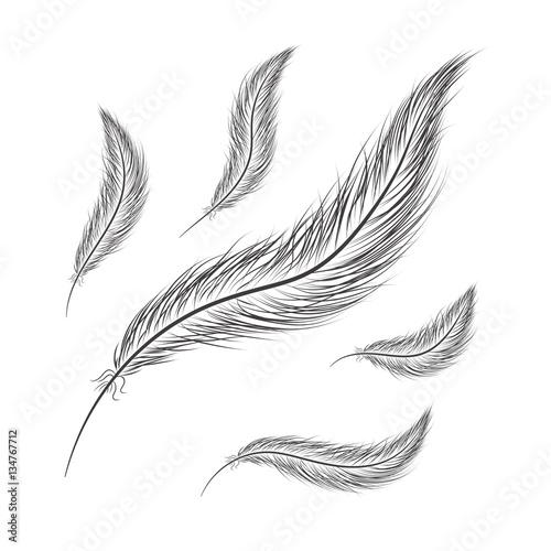 satz-federn-werden-auf-einem-weisen-hintergrund-von-hand-gezeichnet