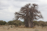 A Group of Impalas Around a Baobab Tree