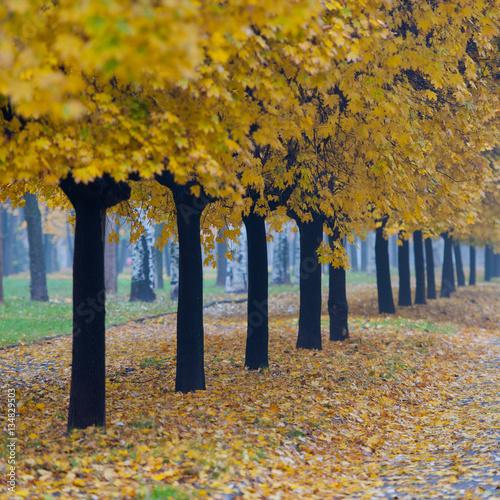 Foto op Plexiglas Herfst trees and fallen