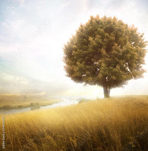 Fototapeta field with tree