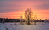 Fantastic dawn landscape in a colorful sunlight. Instagram toning effect. Happy New Year! Dramatic wintry scene. Retro style filter. The enchanting frosty silence. Trees covered with hoarfrost.