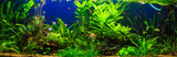 fish in freshwater aquarium with green beautiful planted tropica - 134899198
