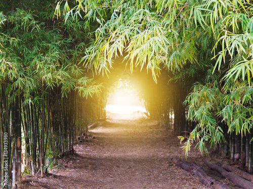 footpath through green bamboo forest - 134933980