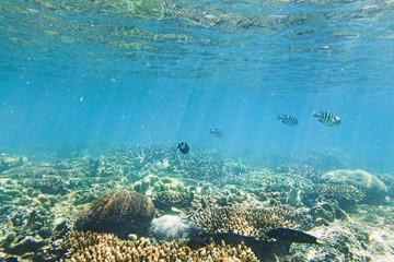 QE Corals Fish