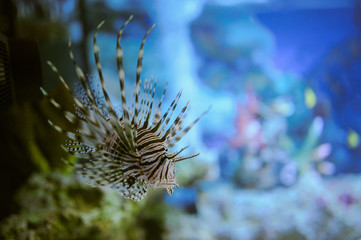 Sea life: exotic tropical coral reef