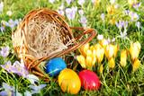 Ostern, Easter, Ostereier mit Körbchen auf Wiese mit Krokussen, copy space