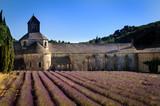 Campos de lavanda en la Abadia de Senanque, Proveza
