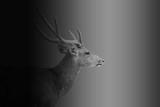 Deer on dark tone