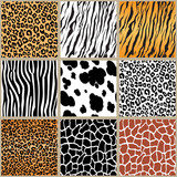 animal skin seamless pattern set, vector illustration Background with african animals pattern Cute hand drawn doodle cards, brochures, covers with wild animals patterns tiger, zebra, giraffe, cheetah