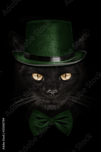 Poster dark muzzle cat  in green hat and tie butterfly
