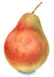 Pear - 135069719