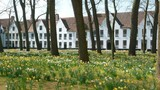 Béguinage de Bruges au printemps (Belgique)