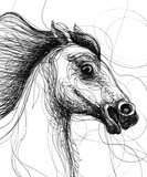 Line drawing of a horse head