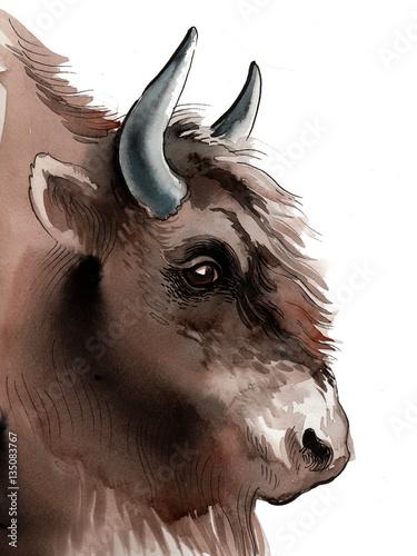 Watercolor bison head - 135083767