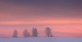 Silhouettes of trees on winter sky background