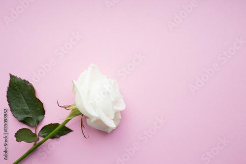 Foto Murales One white rose