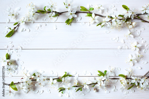 Background with flowering, blooming branches of plums, cherries