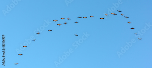 Cranes migrating over Gallocanta Lagoon in, Spain