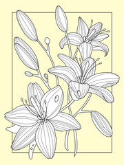 Lily flowers hand drawn vector illustration