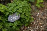 Oregano im Kräuterbeet - 135178987