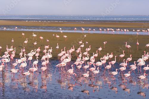 Obraz na Plexi Group of pink flamingos on the sea at Walvis Bay, the atlantic coast of Namibia, Africa.