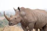 Rhinoceros - Kenya