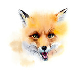 Red fox. Portrait. Watercolor hand drawn illustration