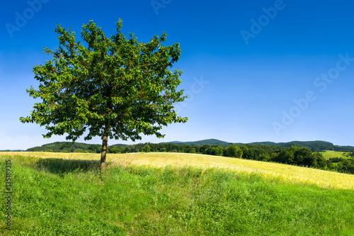 Poster Landschappen Schöne grüne Landschaft vor blauem Himmel