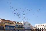 Tauben am Plaza Vieja, Old Havana, Cuba