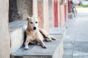 Straßenhund in Cienfuegos, Cuba