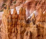 Bryce Canyon Hoodoos & Tree