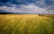 grain field Canada