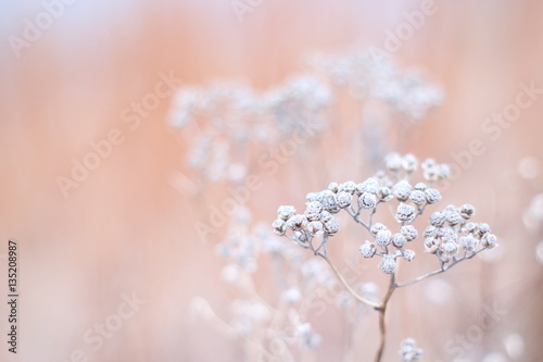 Pastel plant background - 135208987