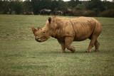 Rhinoceros 3
