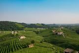 Prosecco vinyards near Valdobbiadene - 135229750