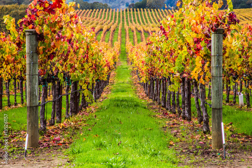 Aluminium Wijngaard vineyard