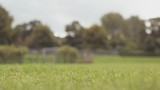 Dog Running  Fetching Ball in Park, Slow Motion