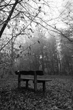 Bench in woodland on a foggy misty morning