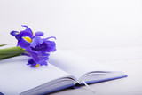 Bouquet of beautiful irises with notebook on white wooden backgr