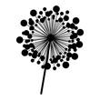 contour dandelion with stem and pistil closeup vector illustration