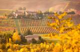 Castelvetro di Modena, vineyards in autumn