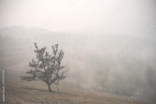 Atmospheric landscape of the Olkhon island under the fog in summer 2015. Lake Baikal, Russian Siberia - 135315568