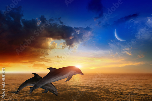 Marine life background - jumping dolphins, glowing sunset Poster