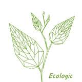 Pianta verde, foglia verdi geometriche astratte, arte lineare di poligoni sullo sfondo bianco, illustrazione vettoriale - 135331737