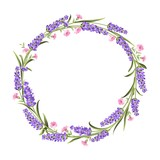 Fototapety The lavender elegant card with frame of flowers. Lavender wreath for your text presentation. Label with violet flowers. Vector illustration.