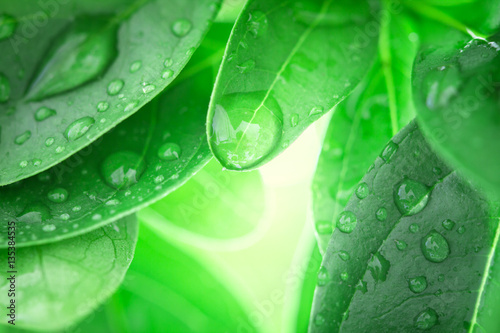 Close up fresh green leaf and water drop in nature