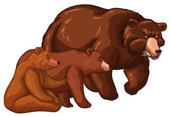 Bear family with little cub