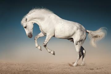 Biały koń na pustyni