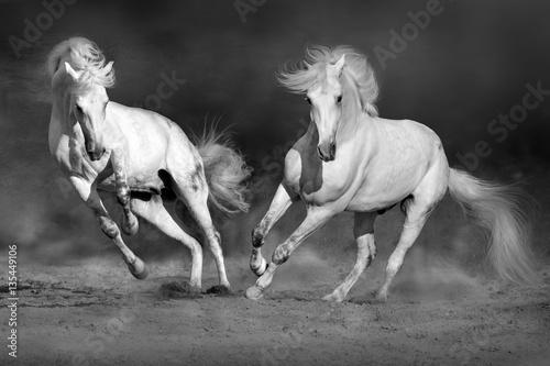 cople-kon-w-ruchu-w-pustyni-przeciw-dramatycznemu-ciemnemu-tlu-czarno-bialy-obraz